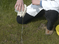 Picture of sieving contents of a water trap through muslin